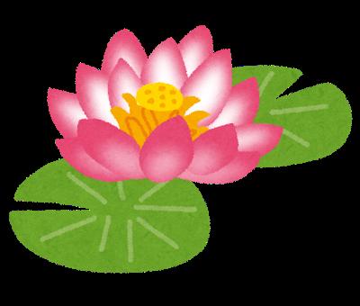 flower_hasu