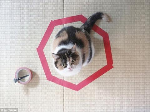 1414767175762_wps_4_Cat_Circles_The_Curious_P