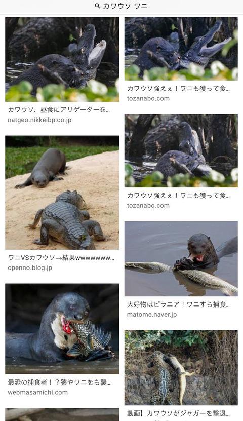 【画像】カワウソ、ワニを殺して食べるwwwwwwwwwww