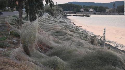 ギリシャで蜘蛛が大量発生し、蜘蛛の巣まみれになる (※画像あり)