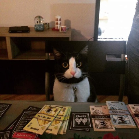 【悲報】卑猥な猫、見つかるwwwwwww(※画像あり)