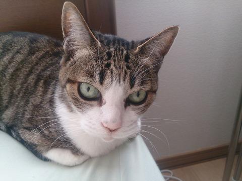 猫にガン飛ばされてるんだけどwwwwwwww (※画像あり)