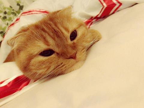 【HKT48】ルンバとまるちゃんは何かを感じてる?宮脇咲良の部屋にはなにかいる&飼い猫まるちゃんの初恋