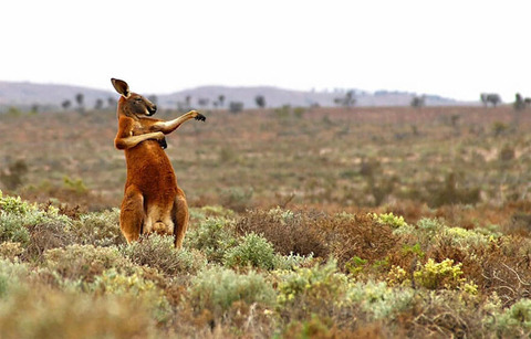Masai Mara, Kenya By Graeme Guy (14)