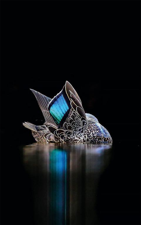 Georgina Statler, Australia