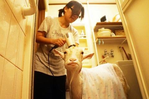 savo-namuose-japone-augina-ozka-59baaad24e875