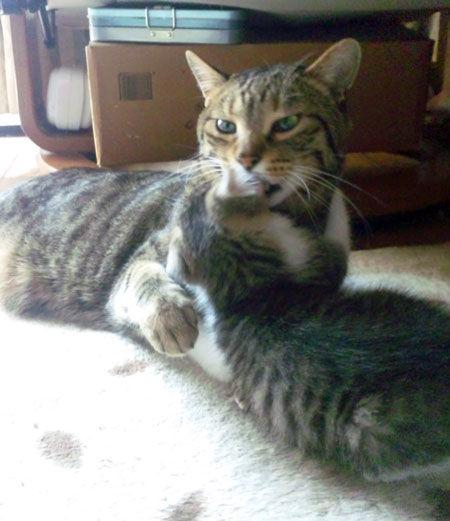 ミライを猫可愛がり
