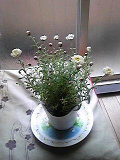 120307_flower1