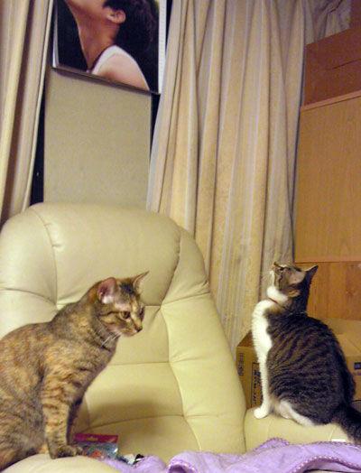 内田篤人と2匹