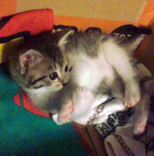 生後5週間のミライ