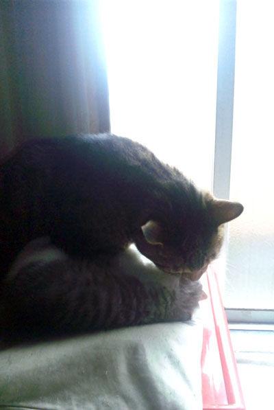窓辺の大野くんとミライ
