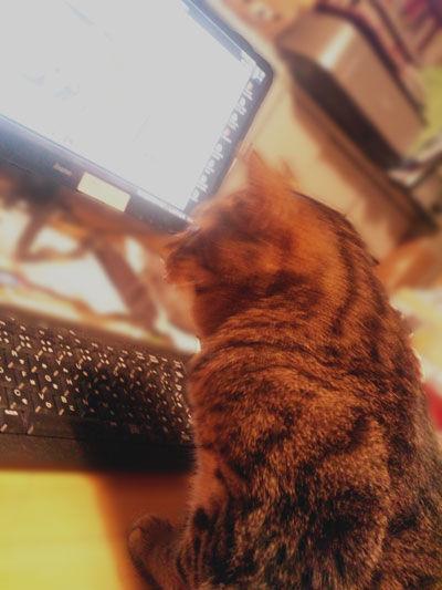 迷い猫掲示板閲覧中?