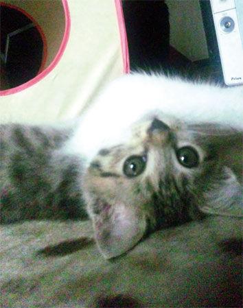 仔猫モデル