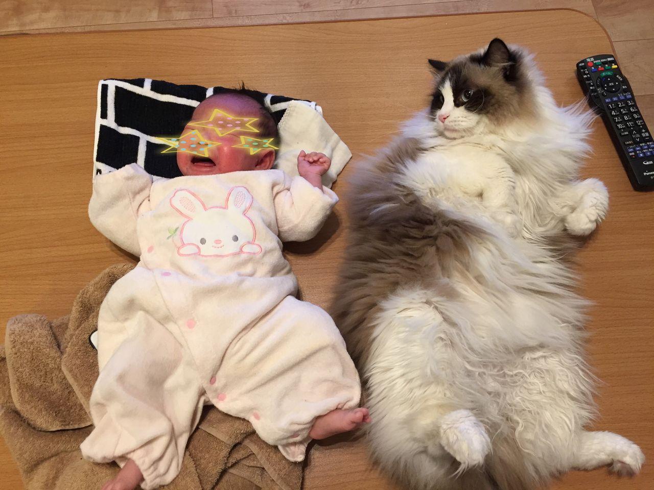 しじみも大きくなりましたが、レオの大きさの前では子猫のように思えてしまいますな(笑)