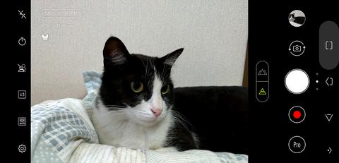 ZenFone 5 ZE620KL AIで猫を認識