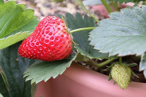gardening1904_005