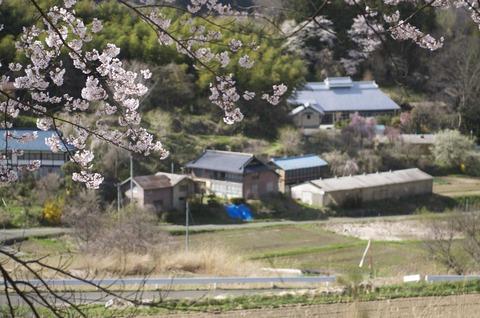 桜と町並み