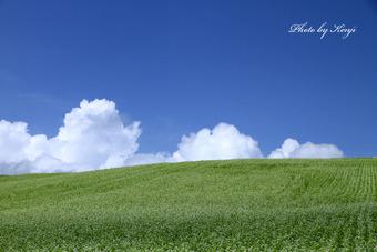 夏雲と蕎麦の丘