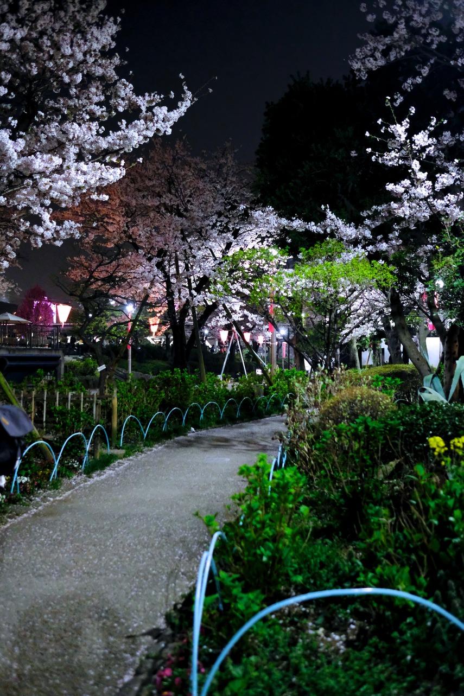 夜桜隅田公園__10__DSF7014