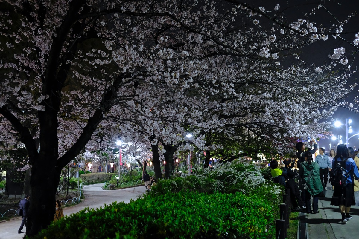 20-10-15__DSF7043_隅田公園