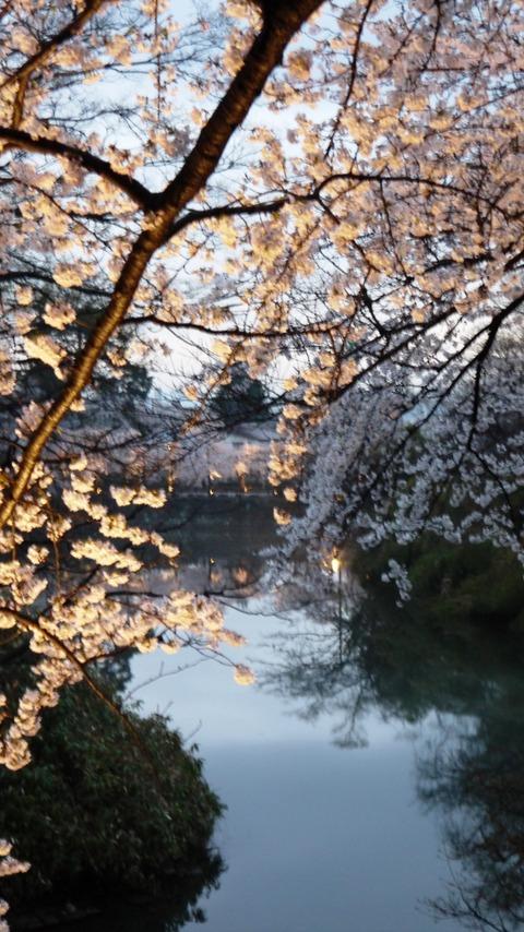 鶴ヶ城(夜桜)3