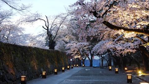 鶴ヶ城(夜桜)4