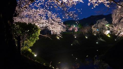 鶴ヶ城(夜桜)15