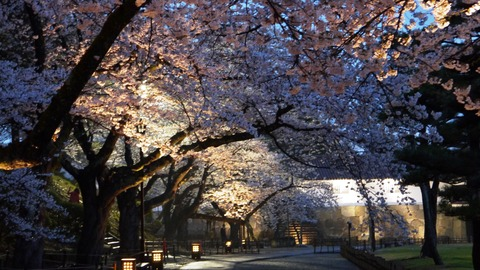 鶴ヶ城(夜桜)8