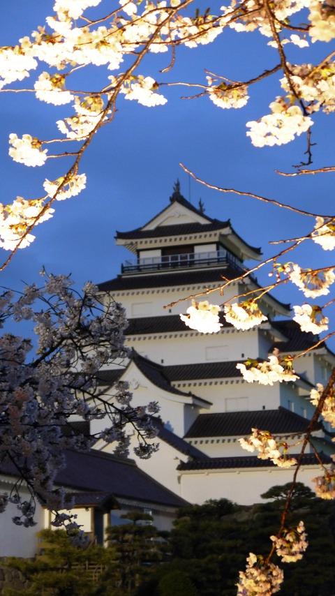 鶴ヶ城(夜桜)10