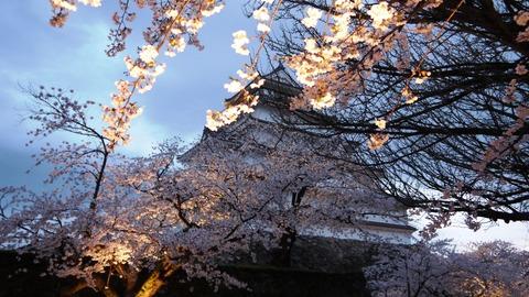 鶴ヶ城(夜桜)7