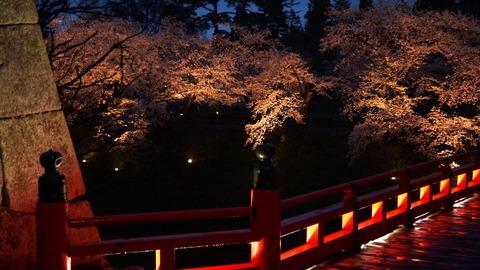 鶴ヶ城(夜桜)12