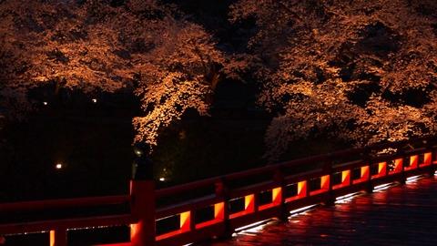 鶴ヶ城(夜桜)11