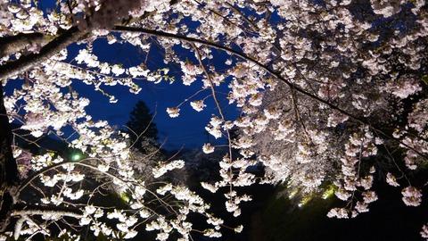 鶴ヶ城(夜桜)17