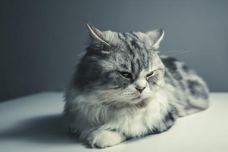 cat-1897224_1280