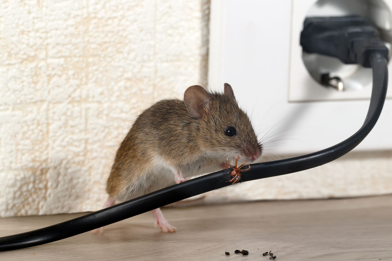 mouse[1]