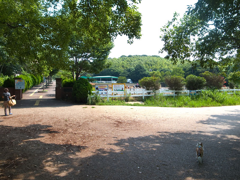 大阪府服部緑地公園犬