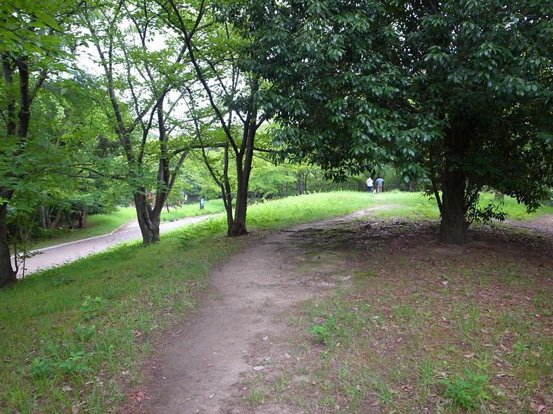 千里中央公園犬散歩