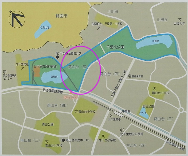 千里北公園犬お散歩