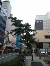 左がラーメン博物館、右がウインズ新横浜。