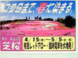 秩父の芝桜は今が見頃の西武宴