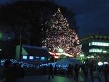 中山年末名物クリスマスツリー
