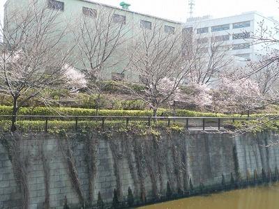 目黒川の桜 2011