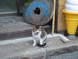 富士屋:猫