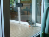 味の山水苑:鴨