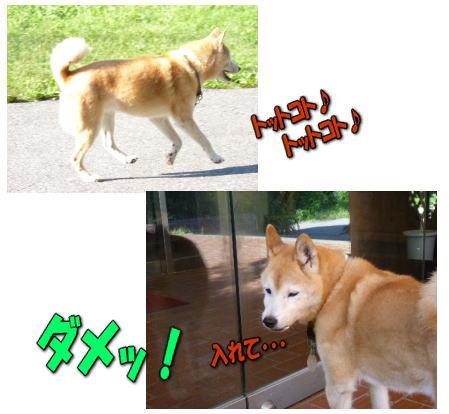 知らない犬