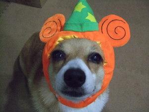 viviかぼちゃ