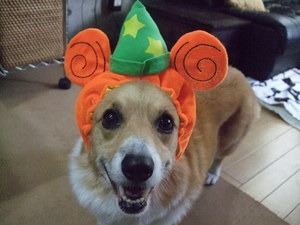 popoかぼちゃ