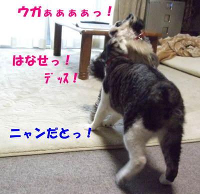 はなせっ!