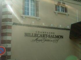 ビルカルサルモン