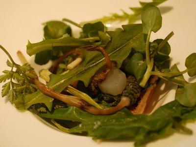 春の山菜と葉野菜達